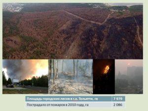 Лес Тольятти